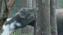 हत्तीचे धूम्रपान?