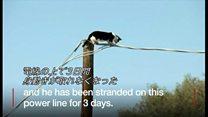 猫が電柱で3日間立ち往生 米アリゾナ州