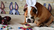 Easter chocolate warning for pet owners