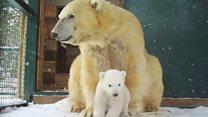 Meet UK's first polar bear cub in 25 years