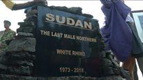مراسم یادبود آخرین کرگدن سفید شمالی نر