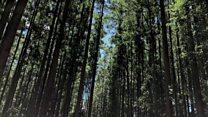 Zimbabwe's struggling timber industry
