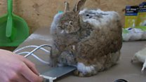 Toaster made from a dead rabbit
