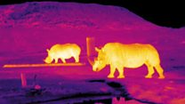 استفاده از فنآوری ستاره شناسی برای ردگیری حیوانات