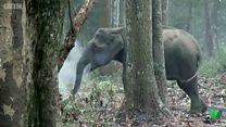 野生のゾウが「喫煙」? 初の様子に科学者困惑
