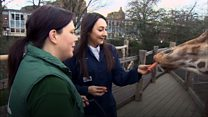 Як стати доглядачем зоопарку в Лондоні?