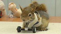 Леденец на бионических колесах