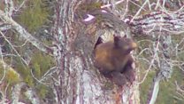 Black bear's hibernation is webcam hit