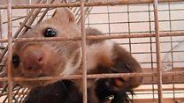 یک بریتانیایی مامور کنترل حیوانات در قندهار