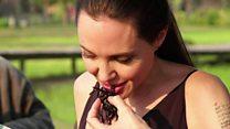 عناكب كمبوديا تدين بالشهرة إلى أنجلينا جولي