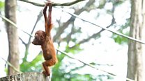 Why is palm oil so controversial?