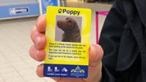 Airport police dogs deliver safety messages