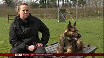 ရဲစွမ်းသတ္တိရှိတဲ့ ခွေးလေး Quantum အကြောင်း