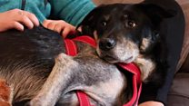 Dexter the dog 'defies death'