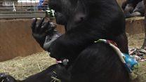Мама горила љуби своју бебу
