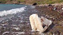 प्लास्टिक खाने वाला एंज़ाइम दूर करेगा कचरे का संकट?
