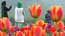 कश्मीर में फूलों के लिए सब कुछ भूलने वाला शख़्स