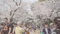 How to Hanami: Japan's cherry blossom season