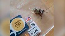 Locust found in supermarket salad lunch