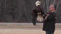 Rescued bald eagle released into the wild