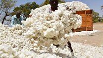 Coton : le Burkina table sur une production de 800 000 tonnes