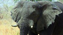 National park's fight against poachers