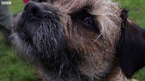 The lab diagnosing arthritis in dogs