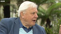 Attenborough: When Kew Gardens cost a penny