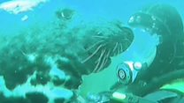 Friendly seal nuzzles up to diver