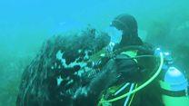 Тюленячі обійми