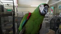 A bird in the hand: Pet shop thief caught