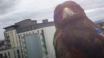 The hawk eyes that patrol Cardiff's streets