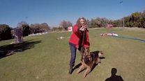 Os cães que protegem mulheres de parceiros violentos na Espanha