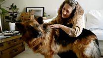 """""""Mi agresor se va porque soy más fuerte"""": cómo perros entrenados protegen a mujeres víctimas de violencia de género"""