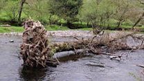 Keeping rivers free of debris on Exmoor