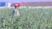 افزایش تولید مواد مخدر و ایجاد ناامنی و فساد در افغانستان
