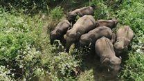 अब ड्रोन करेगा हाथियों की हिफ़ाज़त