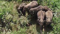 तामिळनाडूतले हत्ती ड्रोन्सना घाबरतात