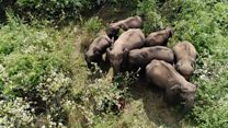Как в Индии отпугивают слонов дронами