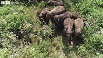 Índia usa drones com rugidos de leões para afastar manadas de elefantes selvagens