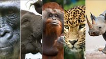 สัตว์ 5 ชนิดที่เสี่ยงสูญพันธุ์เร็วที่สุดในโลก