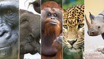 नामशेष होण्याच्या मार्गावर असलेले हे आणखी 5 प्राणी...