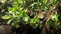 Bees swarm on Cambridge University