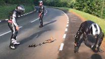 Motor racing fans help ducks across TT route