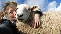 The woman who saves animals from slaughter