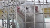 The furious debate over fur