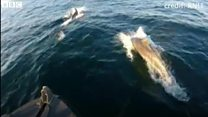 Dolphin surprise for RNLI lifeboat crew