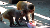 Fruit ice lollies for India zoo animals