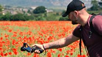 Photographers focus on sea of poppies