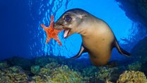 Underwater photographer awarded MBE